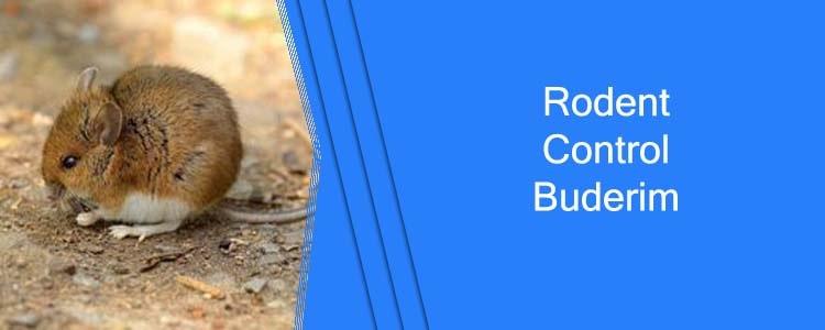 Rodent Control Buderim